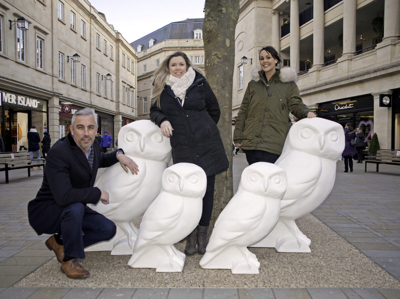 Owls start nesting at SouthGate Bath