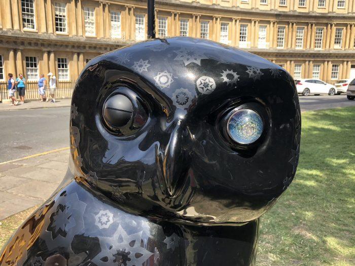 Bird of Play – damaged eye