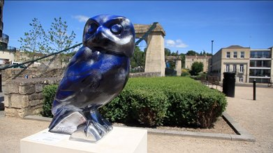 Thousands Flock To Bath To See Owls In Opening Week