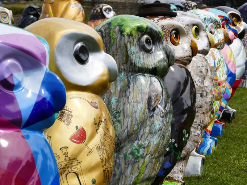 Owls of Bath land in The Telegraph