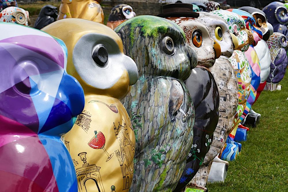 Owls Hoot Farewell weekend – 29-30 September